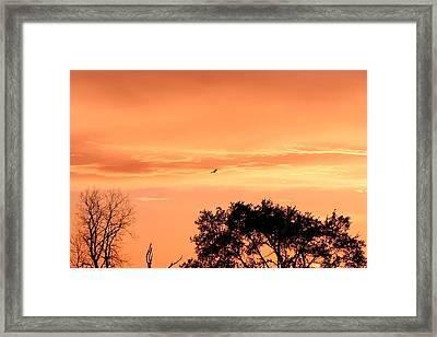 Golden Evening Framed Print by Lorri Crossno