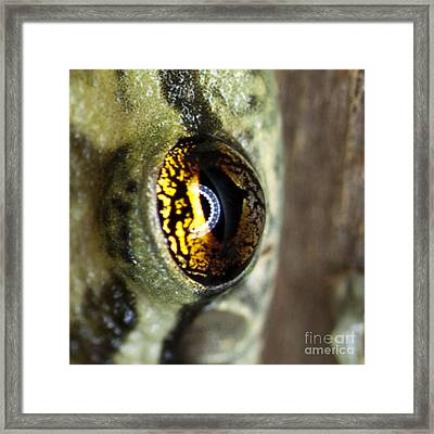 Framed Print featuring the photograph Golden Eye by John Burns