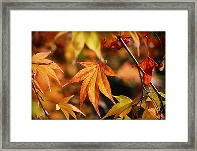 Golden Fall. Framed Print by Clare Bambers