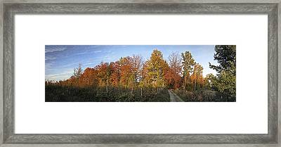 Golden Fall Framed Print by Nafets Nuarb