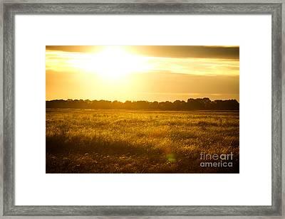 Golden Field Framed Print by James Serikov