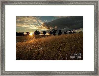 Golden Fields At Sunset Framed Print