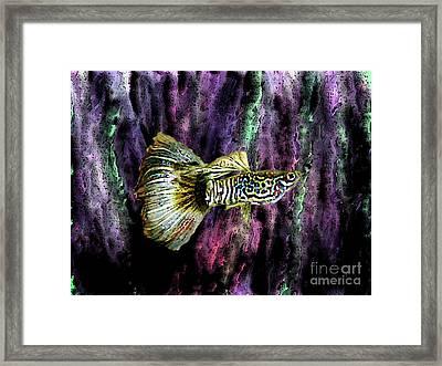 Golden Fish Framed Print by Mario Perez