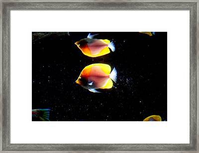 Golden Fish Reflection Framed Print