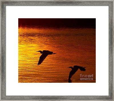 Golden Fly Away Framed Print by Carl Jackson