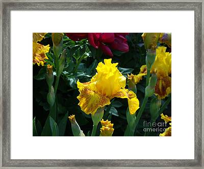 Golden Glory Framed Print by Donna Parlow