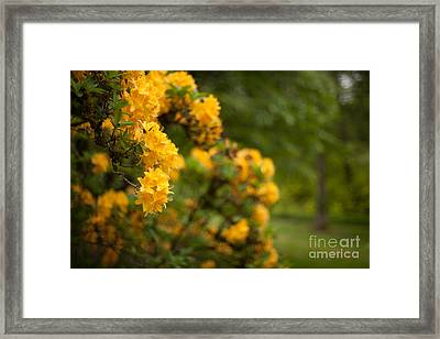 Golden Glow Framed Print by Mike Reid