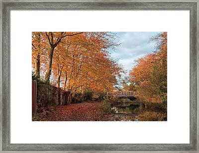 Golden Glow Framed Print by Shirley Mitchell