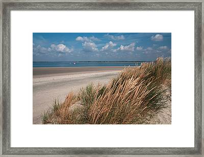 Golden Grasses Framed Print by Shirley Mitchell