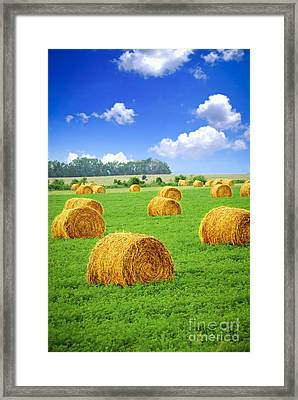 Golden Hay Bales In Green Field Framed Print by Elena Elisseeva