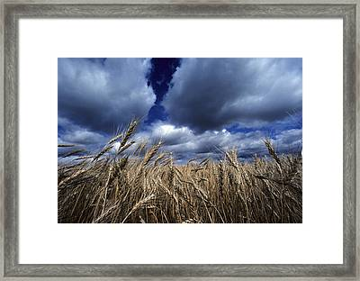 Golden Heads Of Wheat In A Field Framed Print by Annie Griffiths