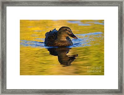 Golden Hen Framed Print by Mike  Dawson