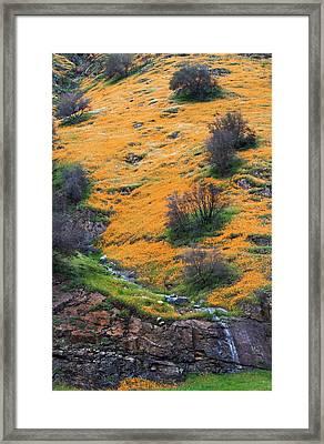 Golden Hills Framed Print by Floyd Hopper