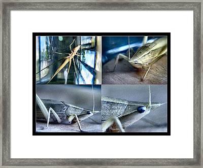 Golden Hopper 2002 Framed Print by Glenn Bautista