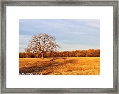 Framed Print featuring the photograph Golden Hour Shadows by Rachel Cohen