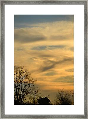 Golden Hue Framed Print