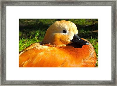 Golden Framed Print