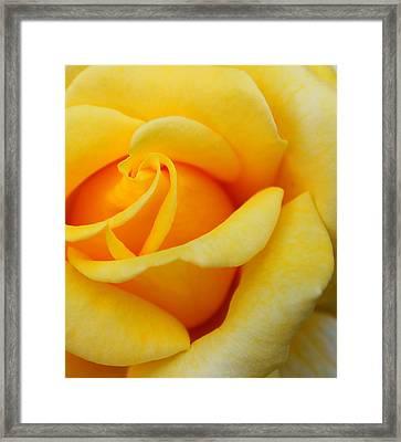 Golden Lady Framed Print by Sonja Bonitto