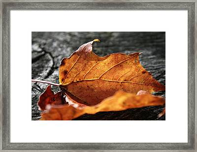 Golden Leaf Framed Print