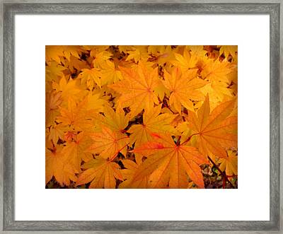 Framed Print featuring the photograph Golden Leaves Of Maple by Cindy Wright