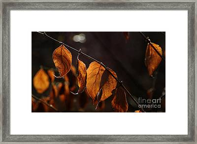 Framed Print featuring the photograph Golden Leaves by Vilas Malankar
