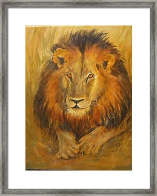 Golden Lion Framed Print by Maureen Pisano