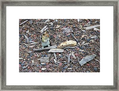 Golden Mantled Ground Squirrel Framed Print by LeeAnn McLaneGoetz McLaneGoetzStudioLLCcom