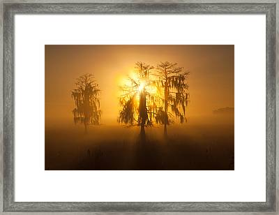 Golden Morning Framed Print by Claudia Domenig