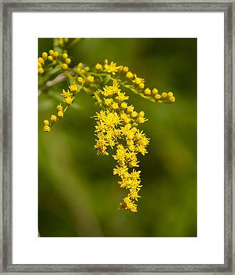 Golden Number Three Framed Print by Michael Putnam