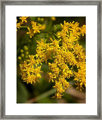 Golden Number Two Framed Print by Michael Putnam