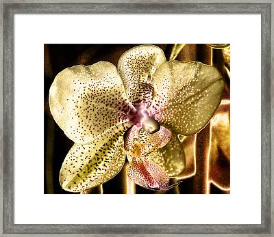 Golden Orchid Framed Print