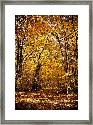 Golden Path Framed Print by Kamil Swiatek