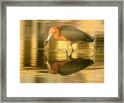 Framed Print featuring the photograph Golden Reflection by Myrna Bradshaw