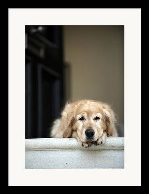 Dog On Front Steps Framed Prints