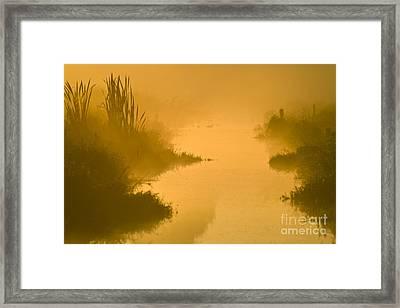 Golden Riverside Framed Print by Heiko Koehrer-Wagner