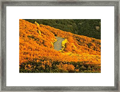 Golden Road Framed Print by Michael Cinnamond