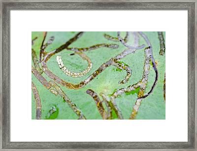 Golden Roads Framed Print