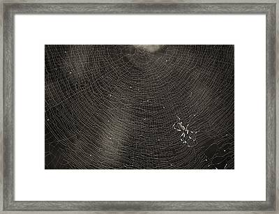 Golden Silk Spider  Framed Print by Patrick M Lynch