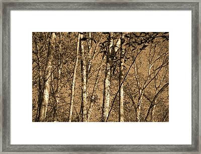 Golden Slumbers Framed Print by Ed Smith