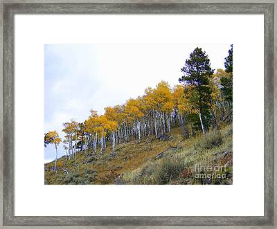 Golden Stand Framed Print