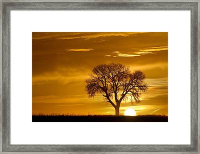 Golden Sunrise Silhouette Framed Print by James BO  Insogna