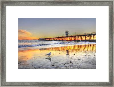 Golden Sunset With Bird Framed Print