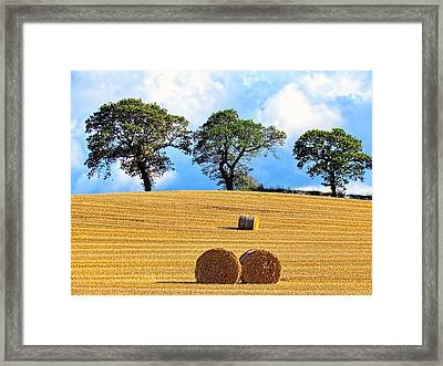 Golden Three Plus Thee Framed Print by Patrick MacRitchie