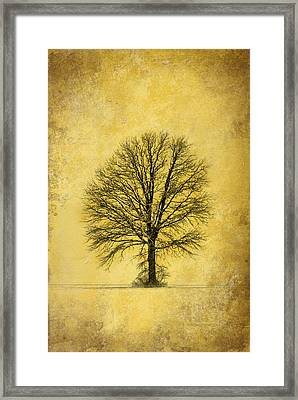 Framed Print featuring the photograph Golden Tree by Mary Timman