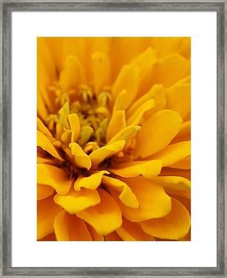 Golden Yellow Burst Framed Print by Bruce Bley