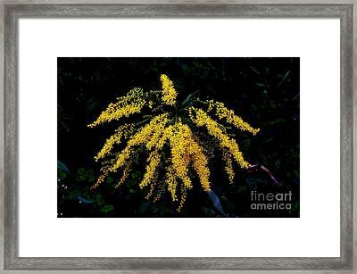 Goldenrod Framed Print by Priscilla Richardson