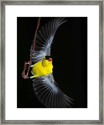 Framed Print featuring the photograph Goldfinch High Wire Act by Randall Branham