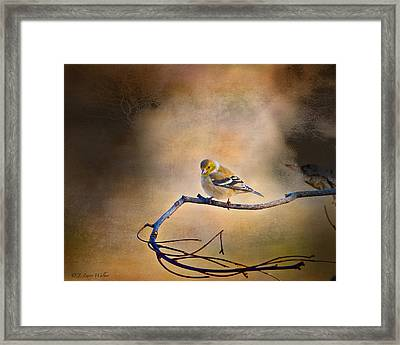 Goldfinch In Deep Thought Framed Print by J Larry Walker