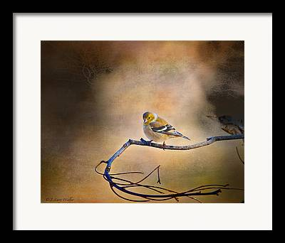 Backyard Goldfinch Digital Art Framed Prints