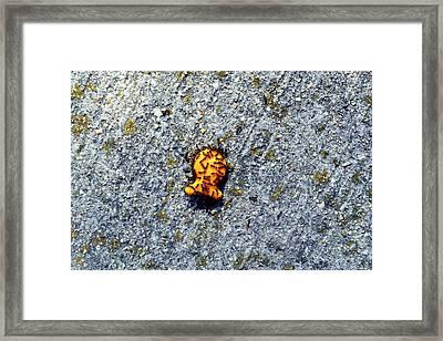 Goldfish Lovers Framed Print
